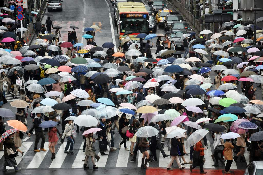 Crowd of people with umbrellas crossing a road at a zebra crossing.