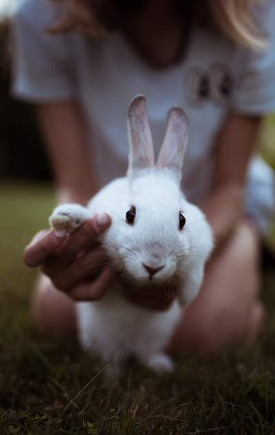 Girl holding white rabbit, making it wave at the camera