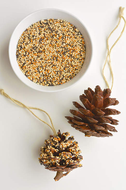 A white bowl containing birdseed and two pinecones on strings, one covered with seed and one not.